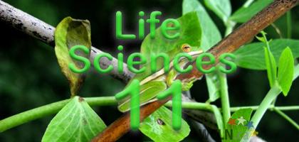 Life Sciences 11 SPIDER 2021